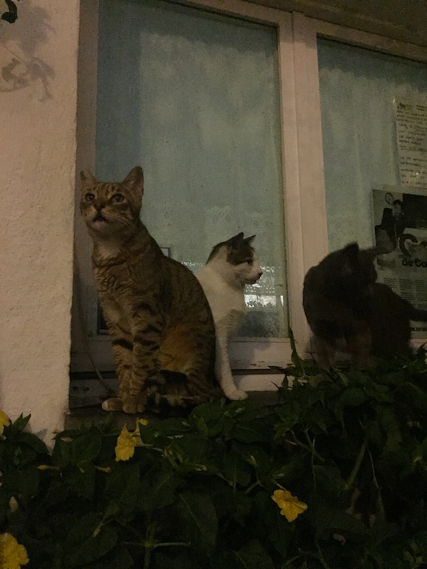 Cats of Cadaques. Of course I find cats wherever I go.
